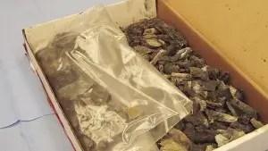exhibit-bones-7