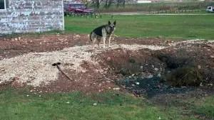 exhibit-burn-pit-dog