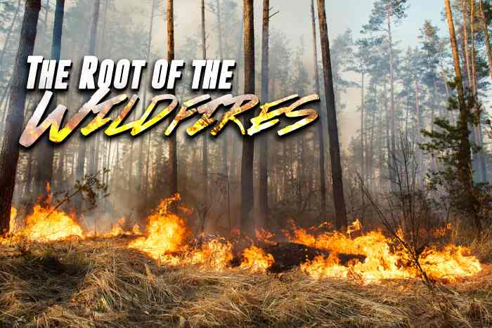 The Root of the Wildfires-min