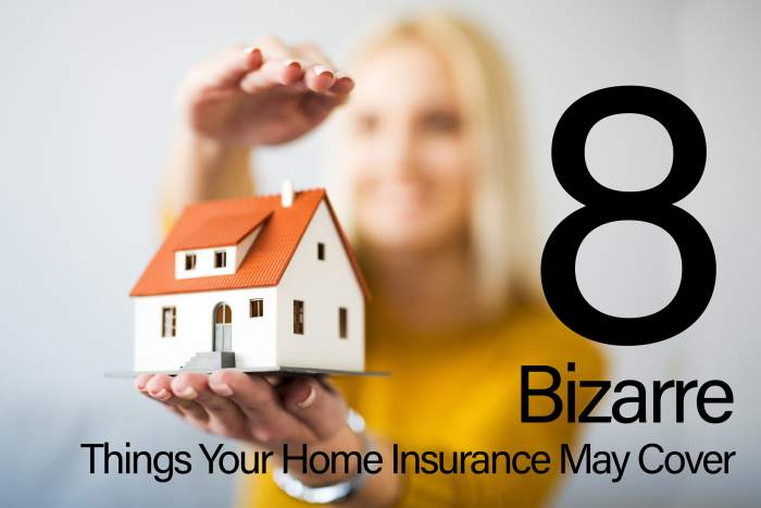 Bizarre Things Your Home Insurance May Cover-min
