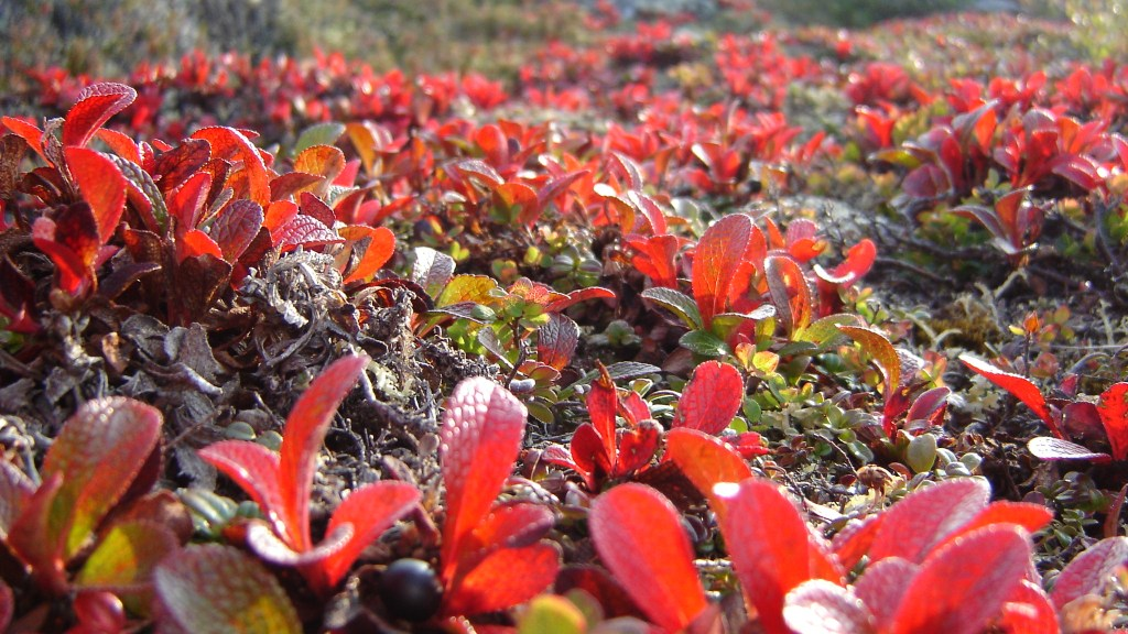 Tundra vegetation at Rio Tinto's Diavik mine in Canada. Image: Rio Tinto