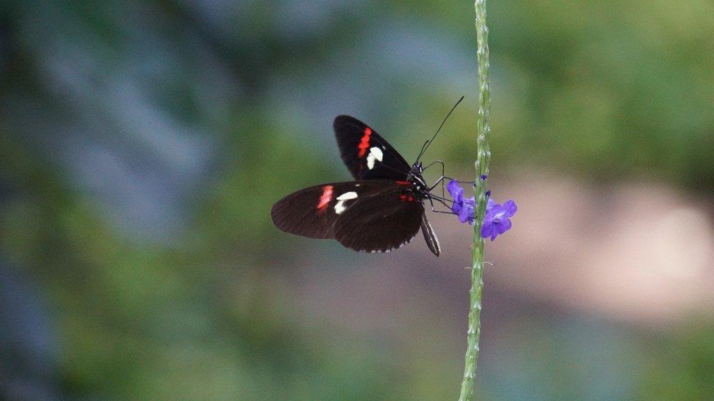 Butterfly on a flower. Image: Pixabay