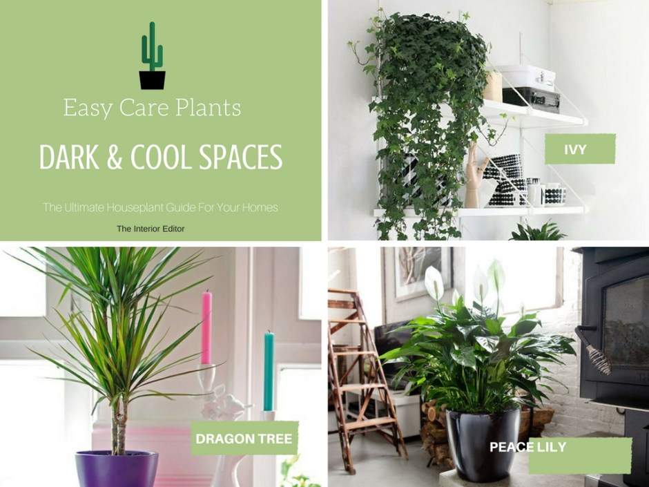 The Ultimate Houseplant Guide for Your Homes - Part 1