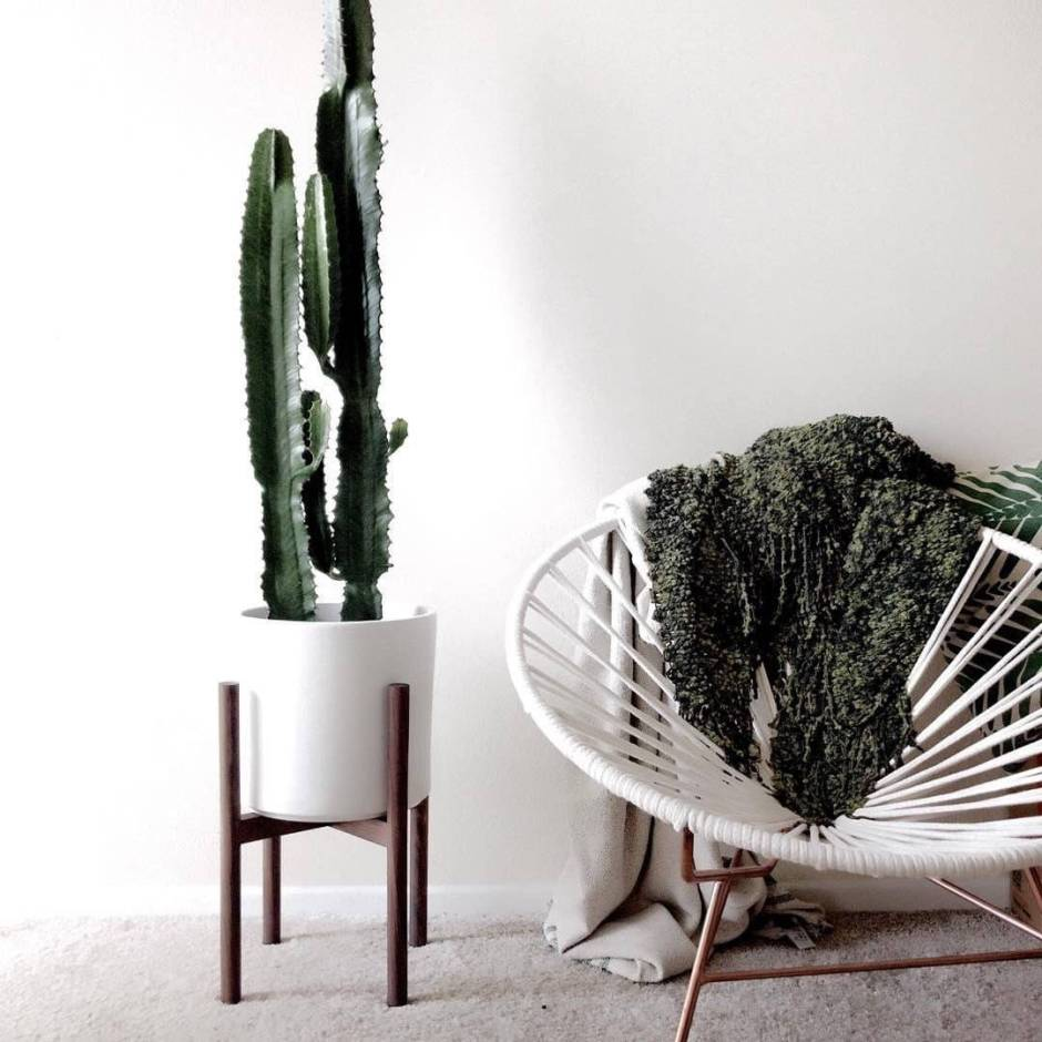 The Cactus Trend | The Cactus adds textural and sculptural qualities to our homes.