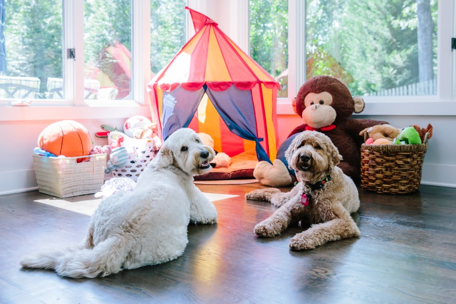 The Creative, Bold & Colourful Home of Paola Roder | Paola's fur babies looking incredibly happy in their colour filled home.