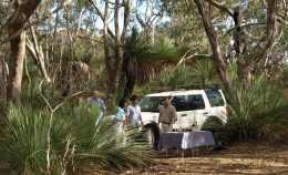 4 Wheel Drive Safari
