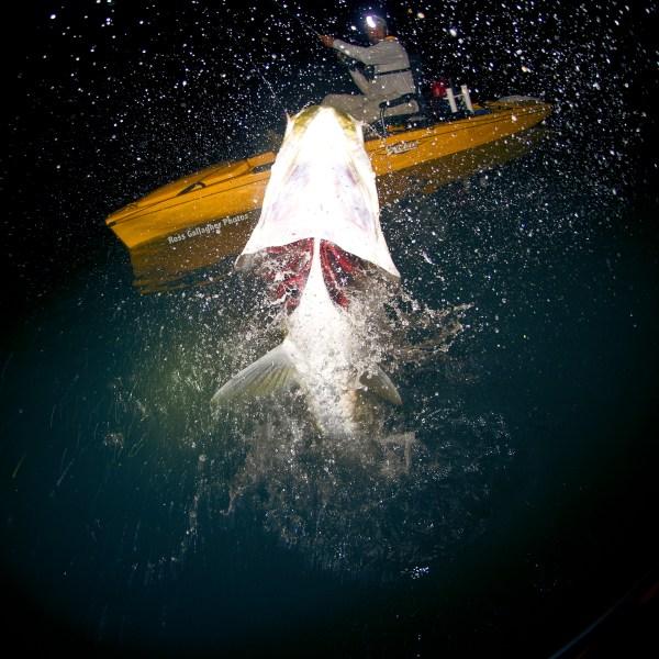 Jay Hobie Massive Jump Square Tarpon Paddle Sewell RaymarineWM 1200