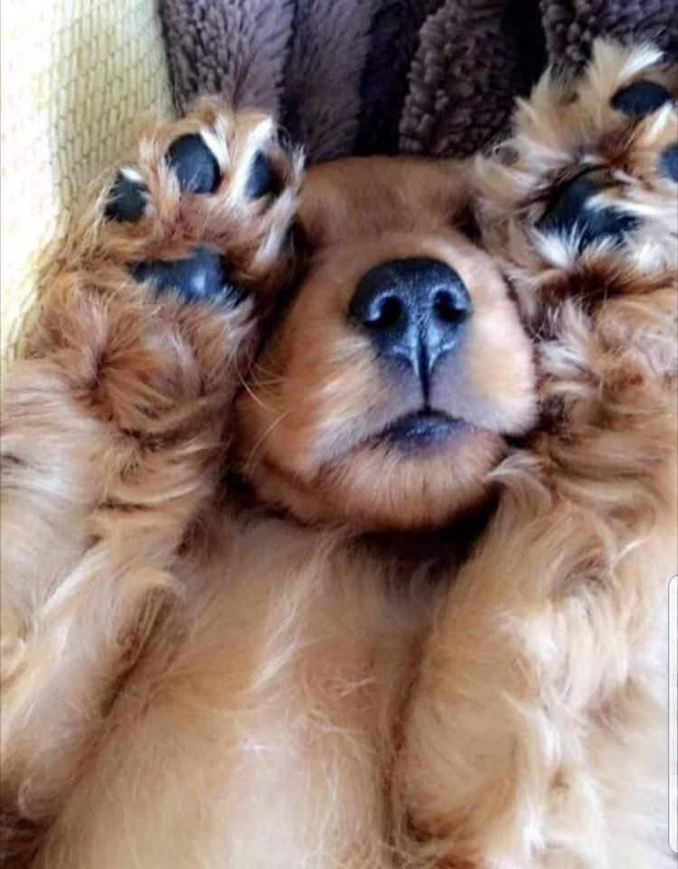 puppy, puppy class, puppy course, puppy taining, dog training, dog trainer, cockapoo, daschund