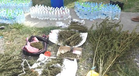 Police confiscate marijuana and kwaso in West Honiara