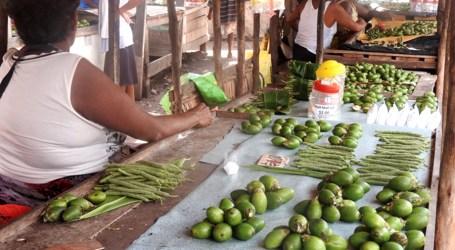 Cheap betel-nut in Auki