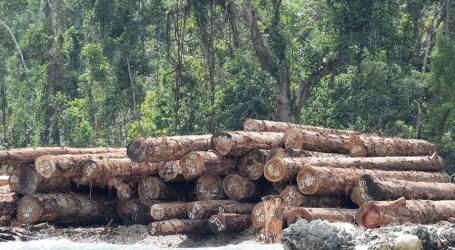 Large shipment of round logs underway