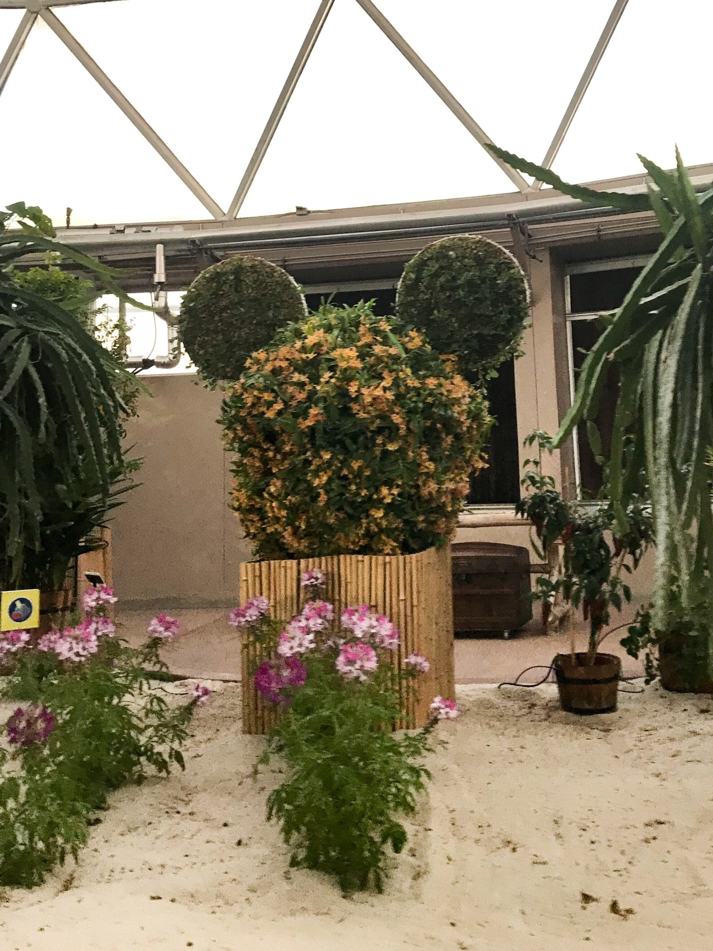 disney-mickey-ears-topiary