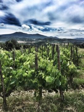 The bonsai high density vineyard