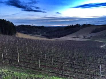 Cantina Sant'Agata vineyards