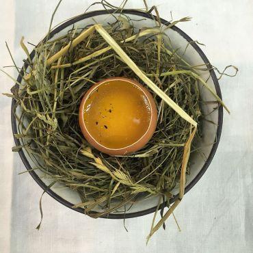 daniel uovo
