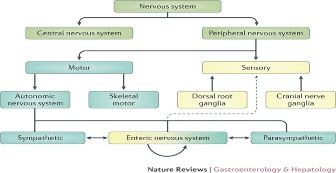 Biological Basis of Behavior in URDU Hindi   Introduction to Psychology BBA104   PSY101