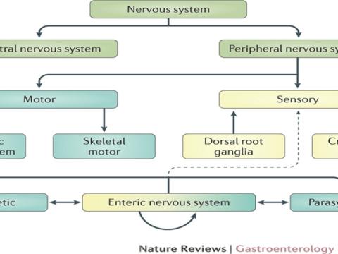 Biological Basis of Behavior in URDU Hindi | Introduction to Psychology BBA104 | PSY101