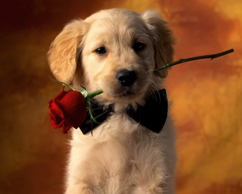 amazing-cute-puppies-wallpaper1
