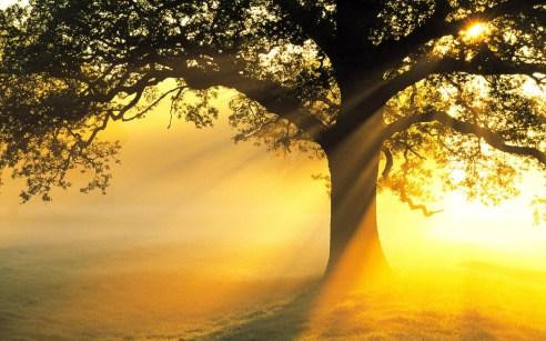 tree-sun-light-rays