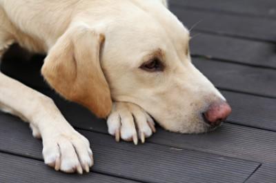 DOG-MOURNING