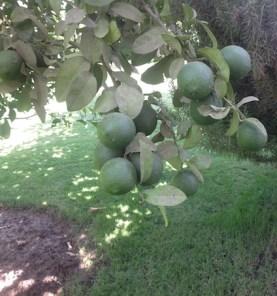 A heavy crop 8.16