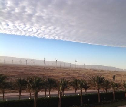 eastern-desert-palms