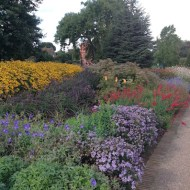 herbaceous-border