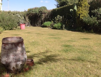 cleared-lawn-and-water-jar