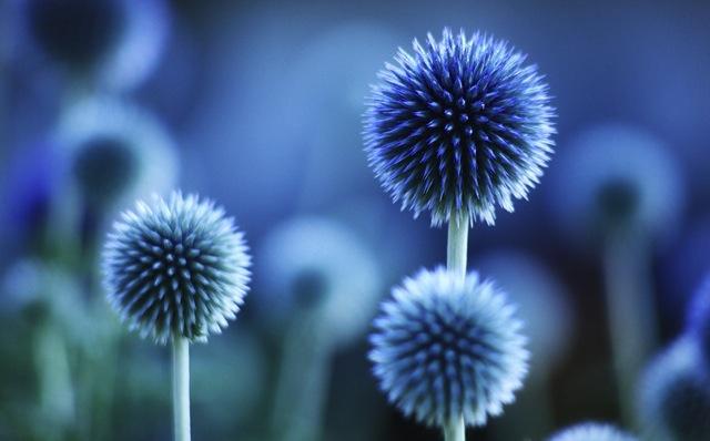 beautiful-blue-flower-denim