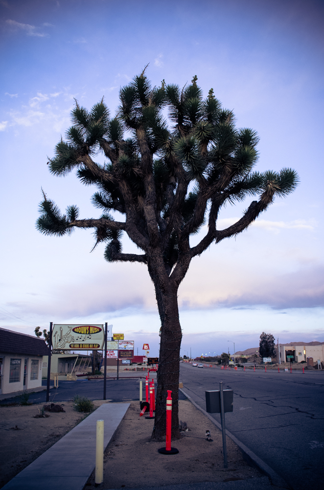 #yuccavalley (9 of 25)