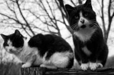 amazonia_essay_cat