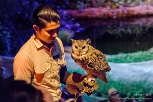 Night Safari Show
