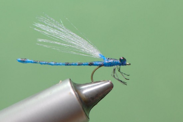 mono abdomen damselfly dragon fly blue