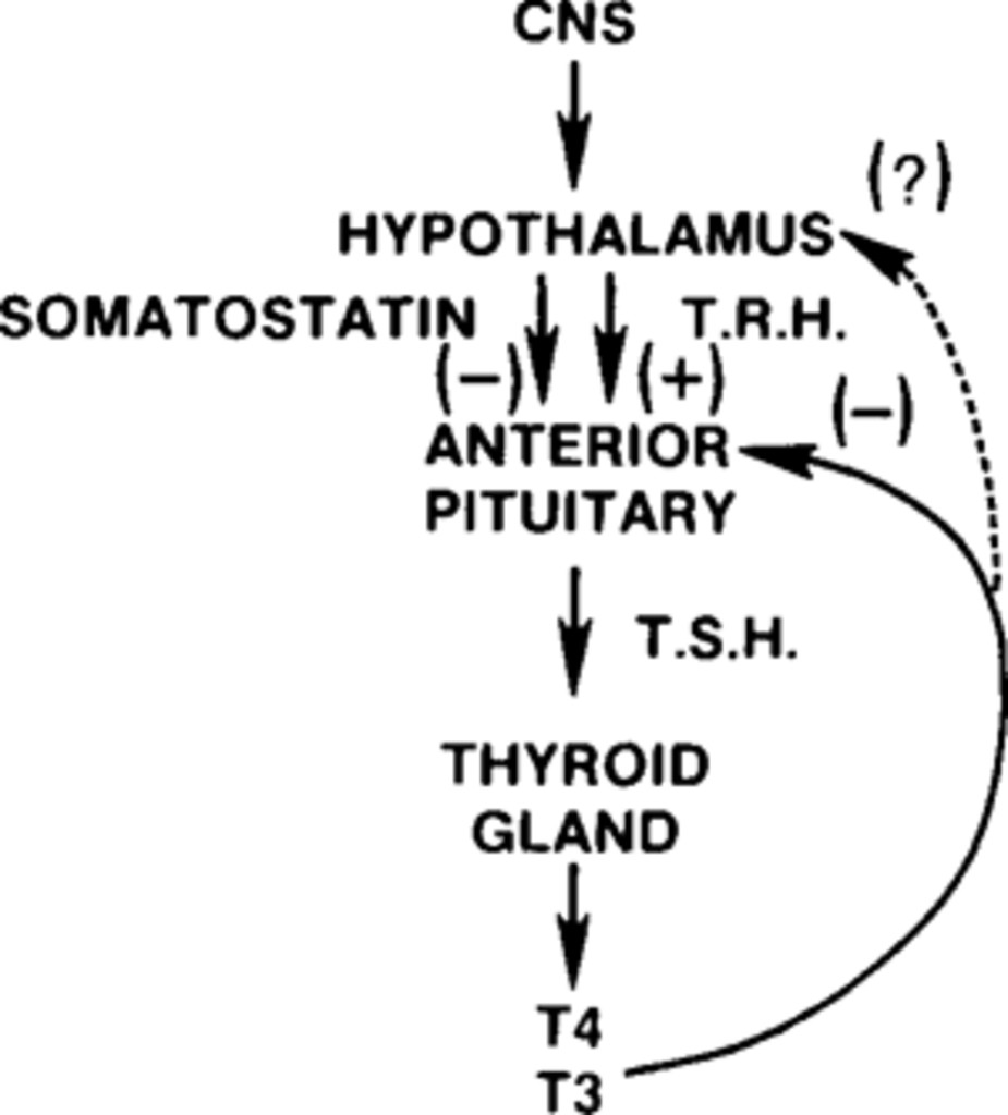 Clinical endocrinological approach to hypothalamic