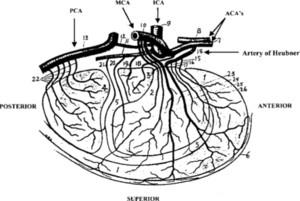 The recurrent artery of Heubner: Otto Heubner's