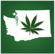 Washington-Pot-Leaf