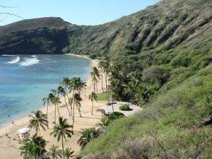 hawaii-mj-weed-thcf