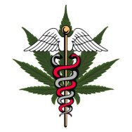 New Poll Finds Strong Support for Medical Cannabis Legalization Initiative Among Utah Voters