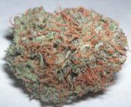 cannabisbud