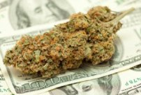 marijuanamoney