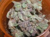 cannabispurps