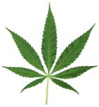 leafocannabis