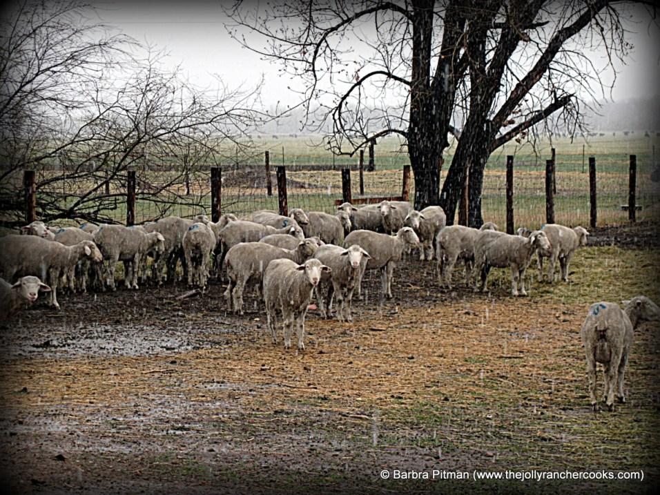 Spring Lambing Storm, April 2016