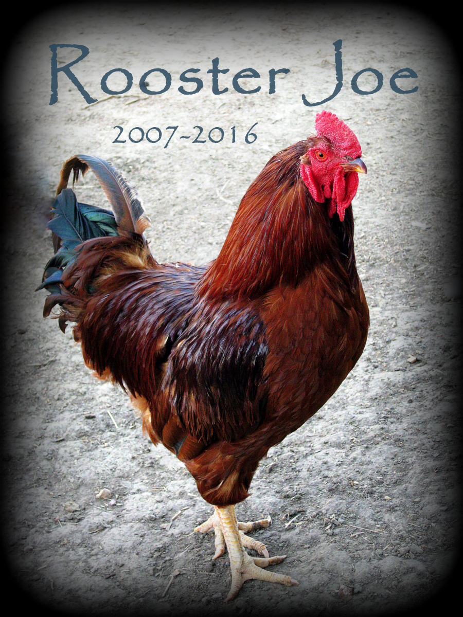 Rooster Joe RIP cover