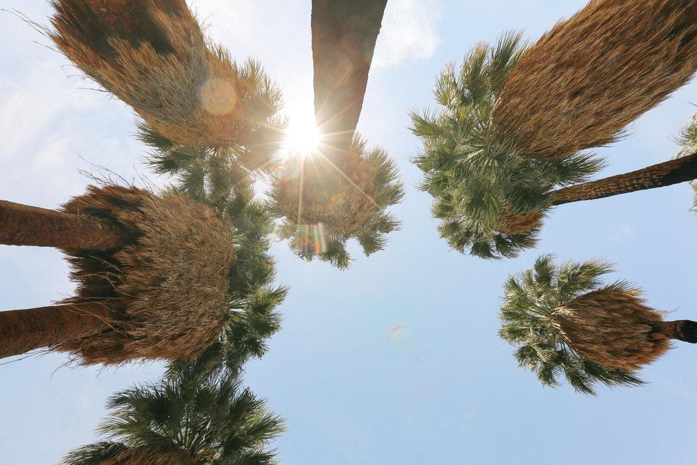 Joshua Tree Super bloom hike at 49 Palms Oasis