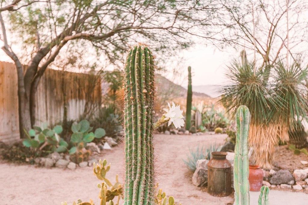 cactus garden at the Joshua Tree Hacienda