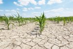 Drought: A Prowling Pandemic is on the Way