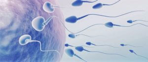 Male Infertility Treatment
