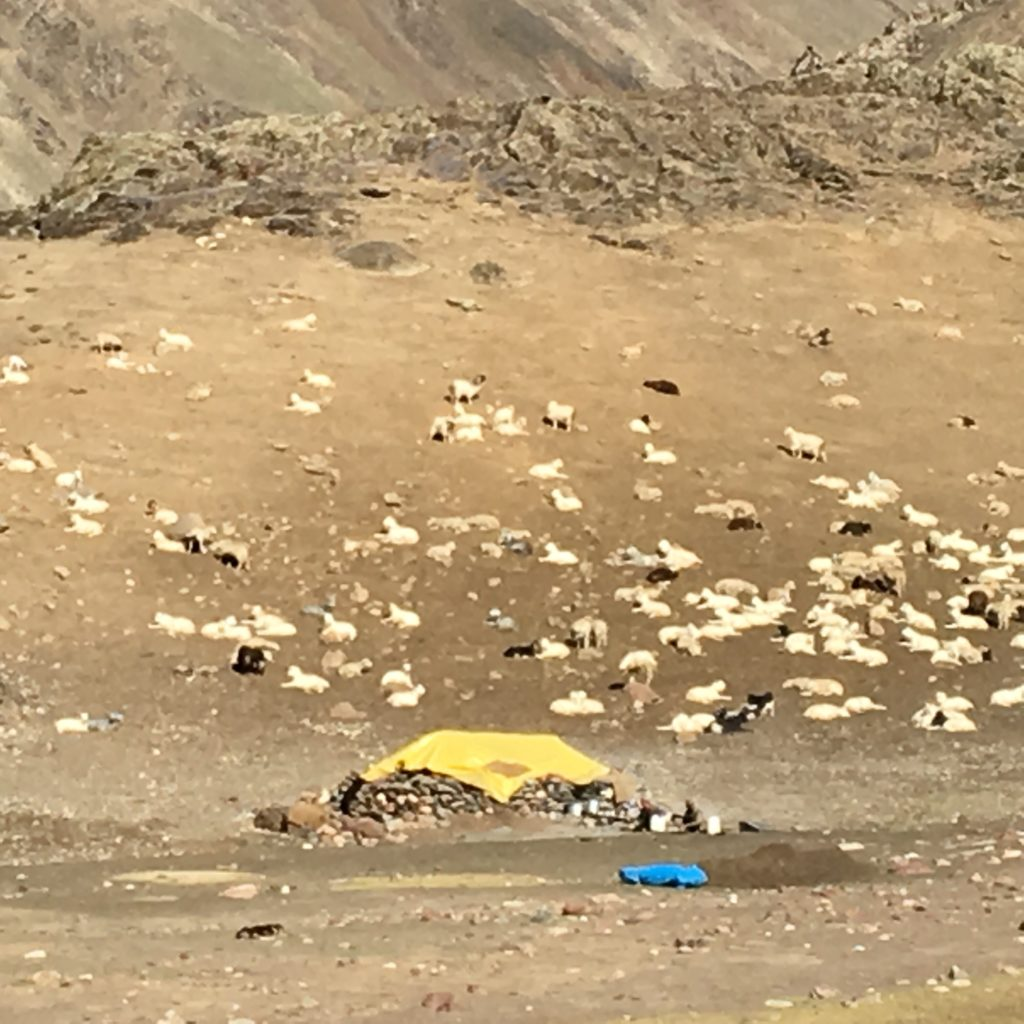 The goat herder's home