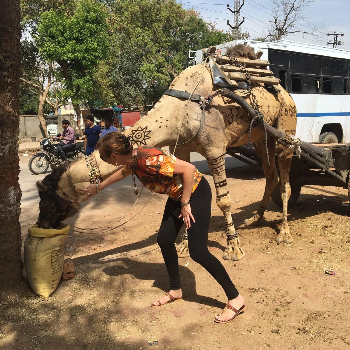 Me petting a camel